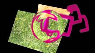 Giulia-o-la-nuova-Eloisa-Jean-Jacques-Rousseau-attachment