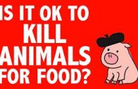 PHILOSOPHY-Ethics-Killing-Animals-for-Food-HD-attachment